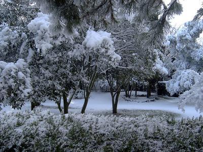 Volveu a neve