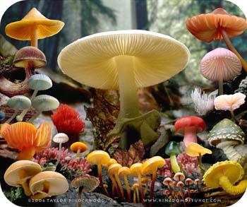 XI Festa dos Cogumelos