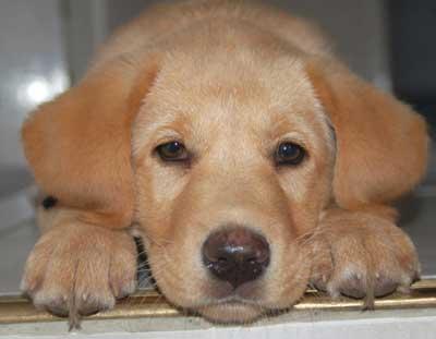 Cans presuntamente envelenados